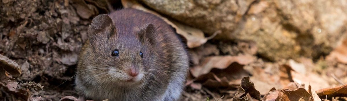5 Ways You Can Easily Critter-Proof Your Cabin